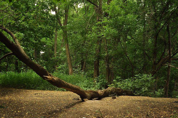 filosofie de omvallende boom