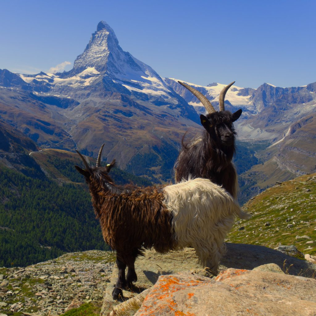 5-seenweg Zermatt matterhorn