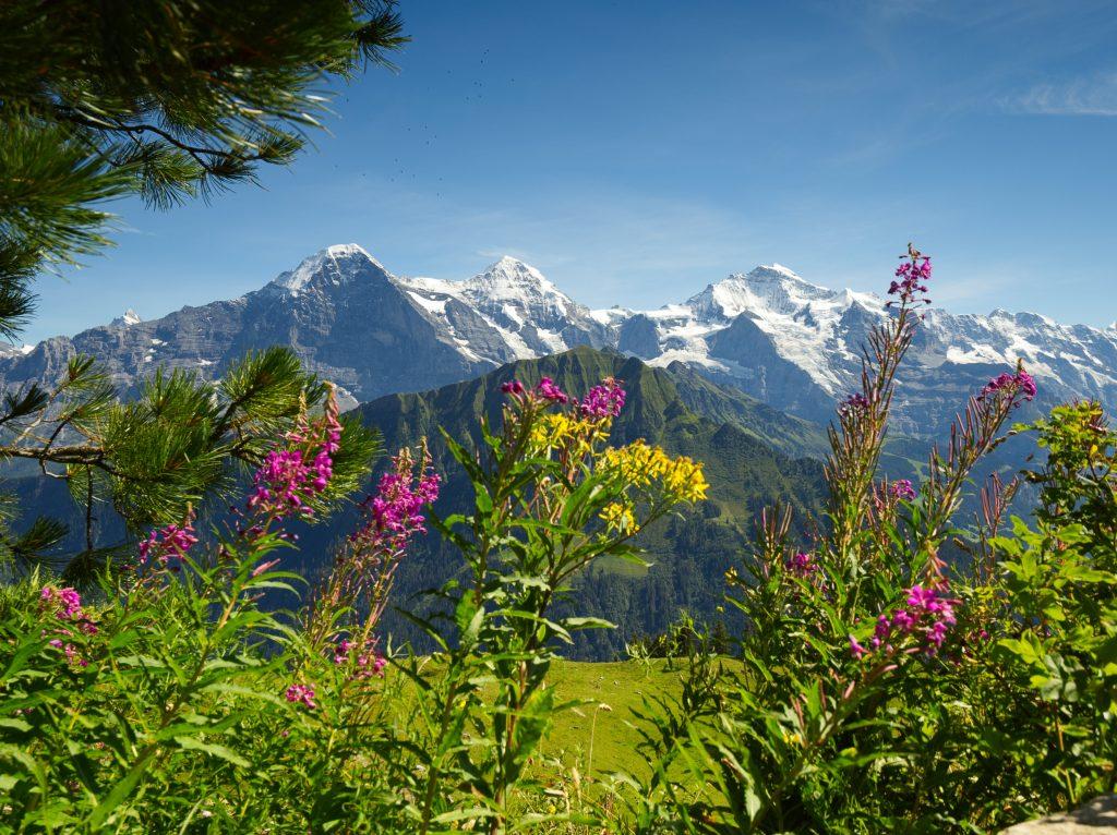 alpengarten schynige platte